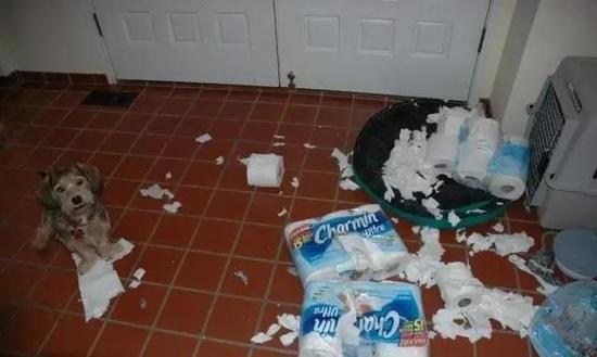 家里养了宠物 装修时要注意些什么?